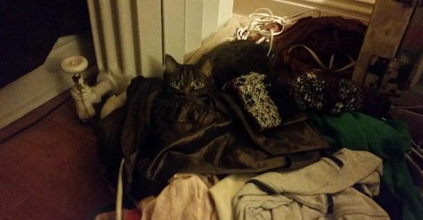 cat clothes pile 3