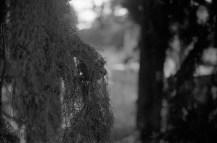 cypress detail