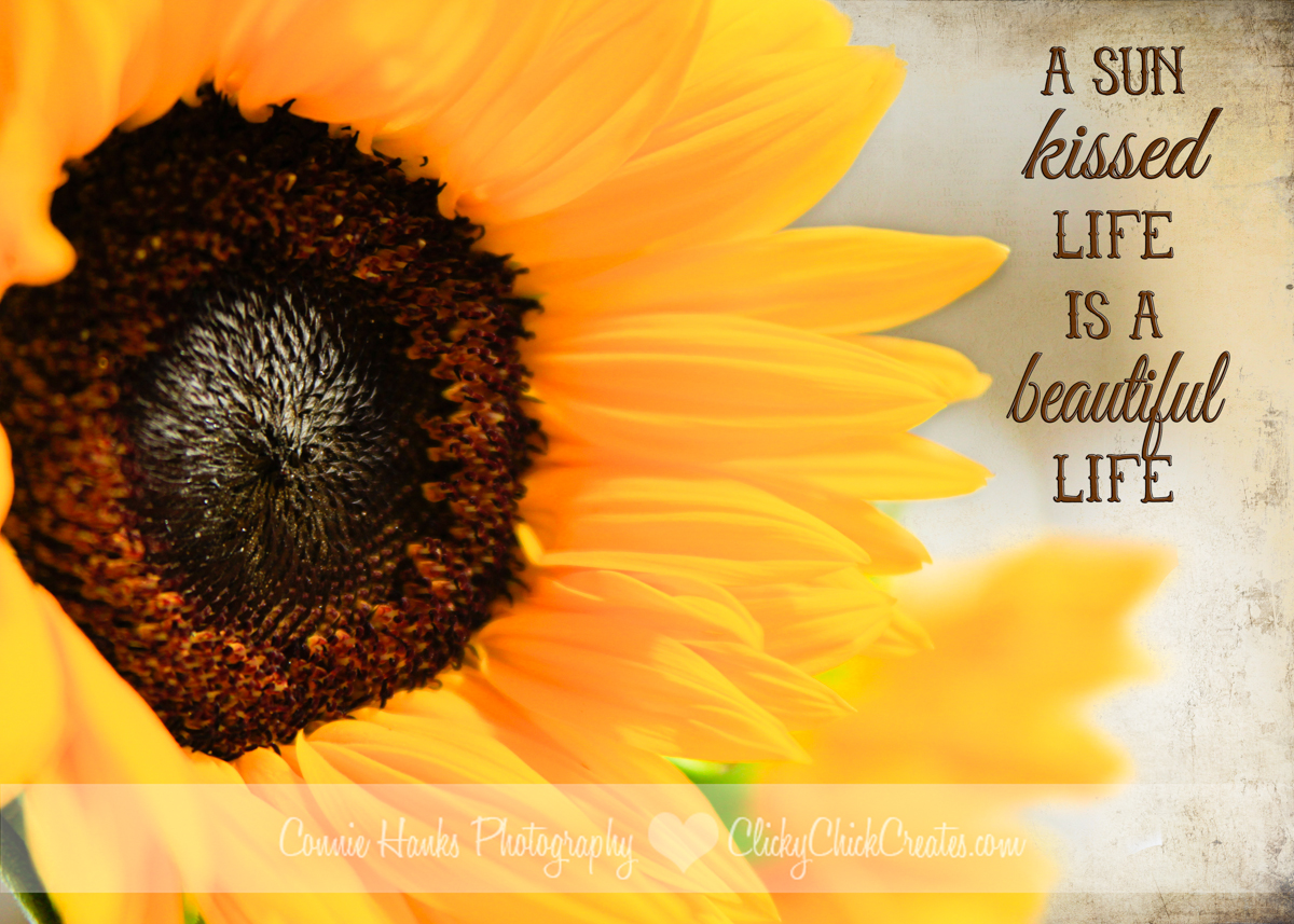 Free Desktop Wallpaper Scripture Fall Inspiring Sunflower Cy365 Amp Texture Tuesday Clicky Chick Creates