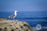 Connie Hanks Photography // ClickyChickCreates.com // La Jolla, beach, photography, San Diego, cove, morning, waves, crashing