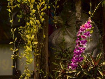 La natura che invade la Bangkok di Thonburi