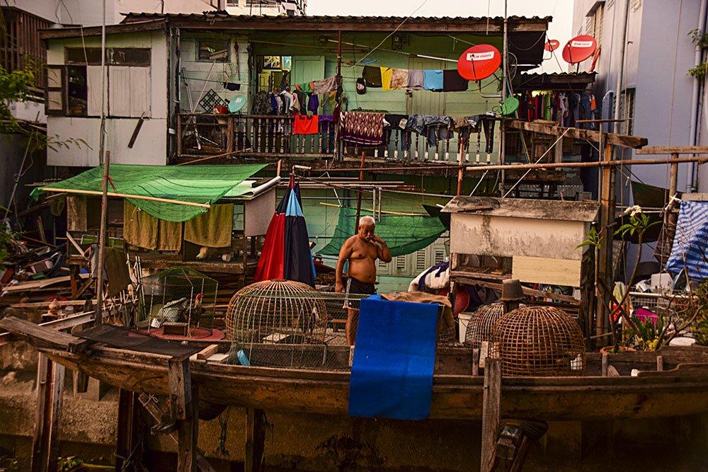Un allevatore di galli da combattimento a Thonburi