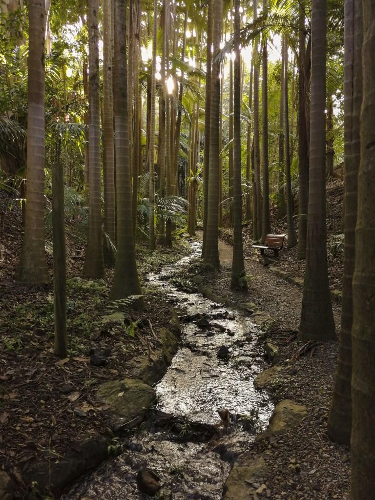 Brisbane Botanic Gardens Noi nella Rainforest