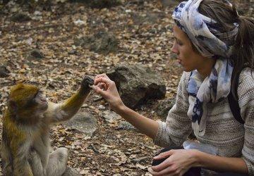 Marocco Foresta Cedri Io che Interagisco con una Scimmia