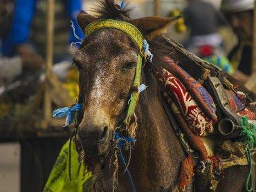 Marrakech Animali nel Mercato nella Medina Vecchia