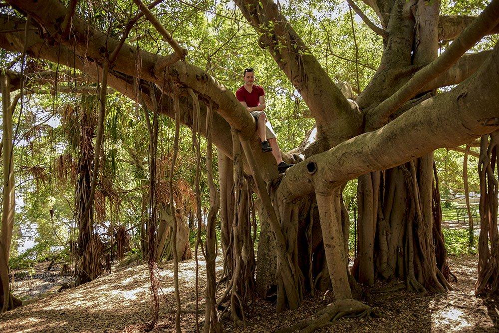 Enrico che si arrampica su un Ficus Gigante Brisbane