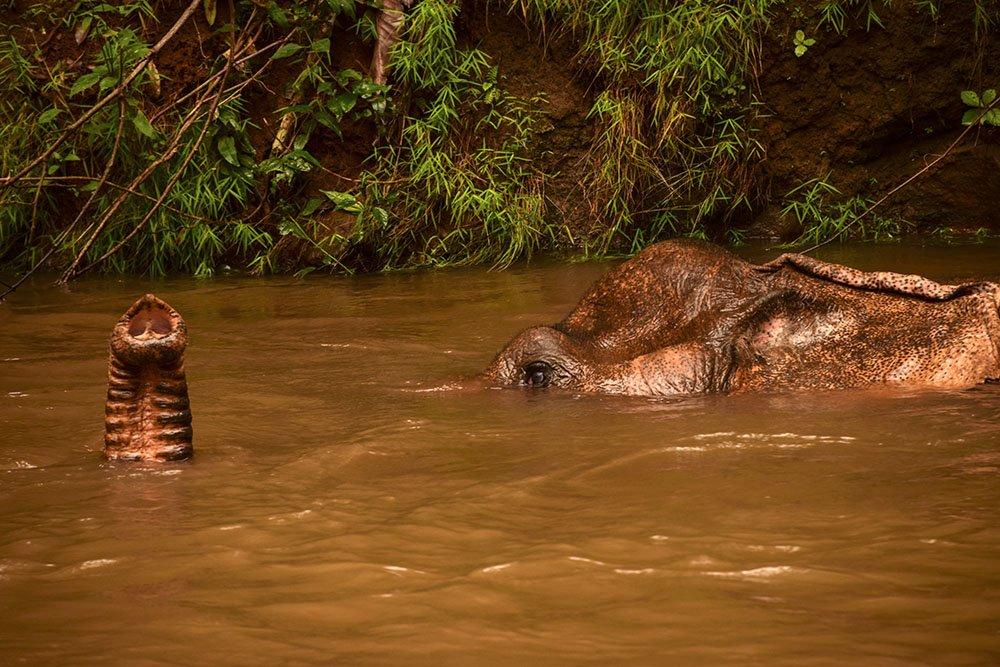 Elefanti Cambogia Mondulkiri
