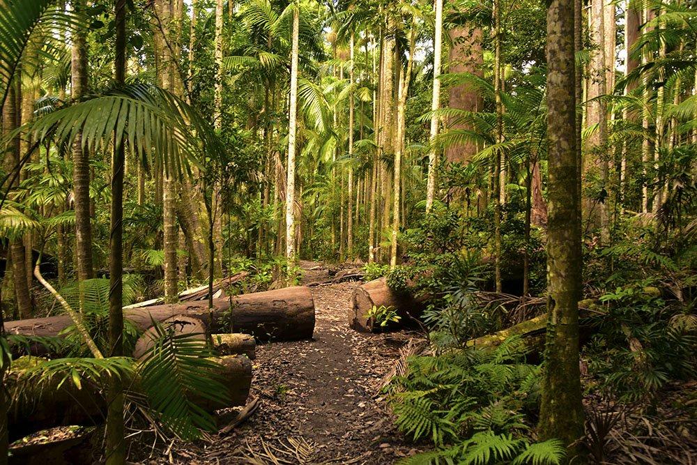 All'interno della foresta pluviale australiana