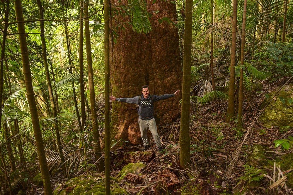 Enrico accanto agli alberi secolari
