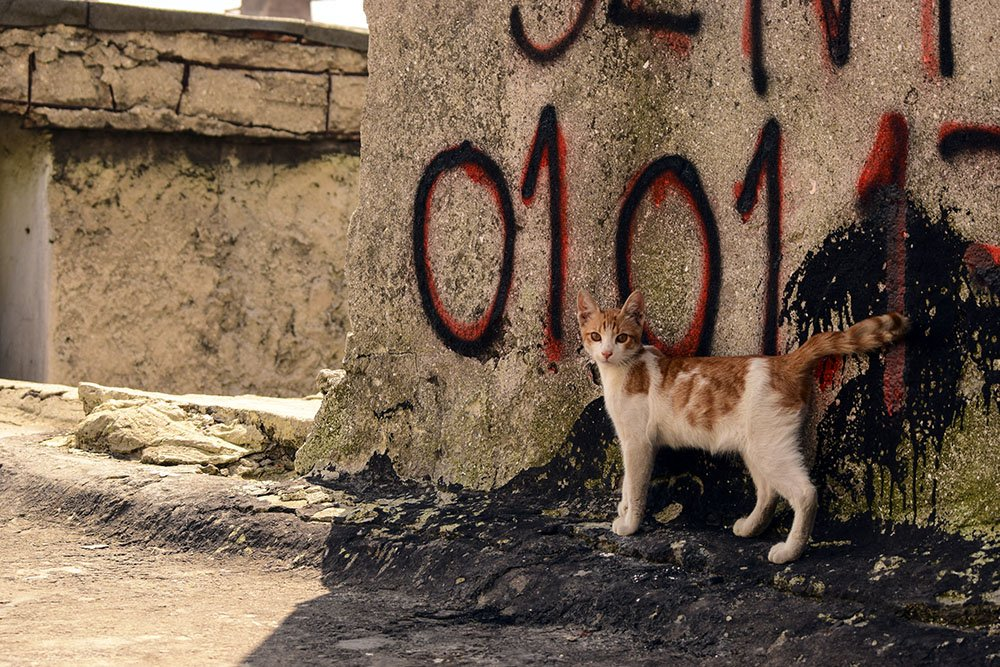 Istanbul: incontro con un gattino sui tetti del Gran Bazar