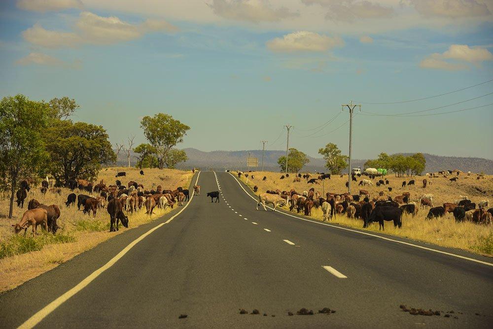 Australian On The Road