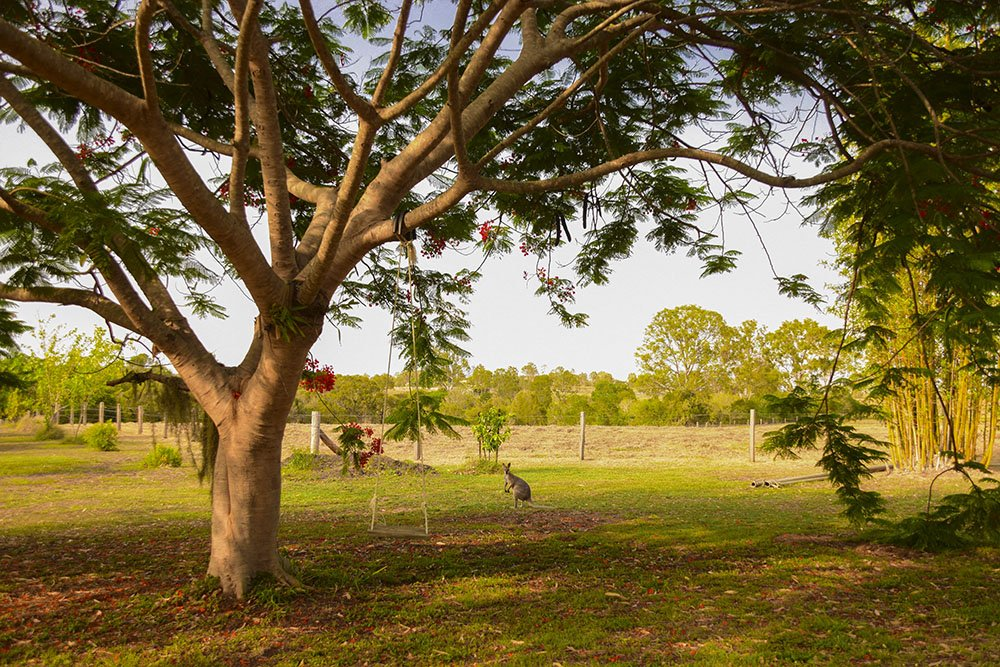 South Bingera Farmstay Tenuta bellissima