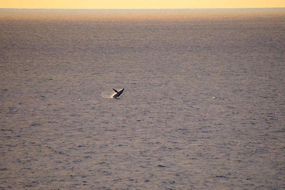 North Stradbroke Island Whale