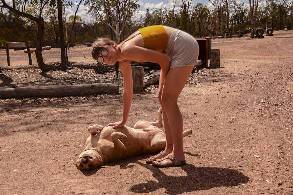 Un cagnolone incontrato durante il nostro on the road in Australia