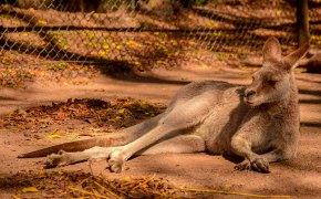 Cose strane e curiosità sull'Australia