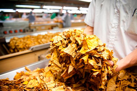 Fumicultura é motivo de preocupação para a FETAG-RS