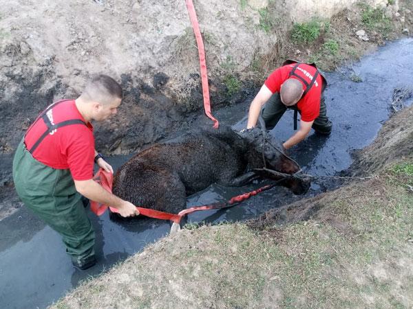 Bombeiros Voluntários de Tapes resgatam cavalo que caiu em vala