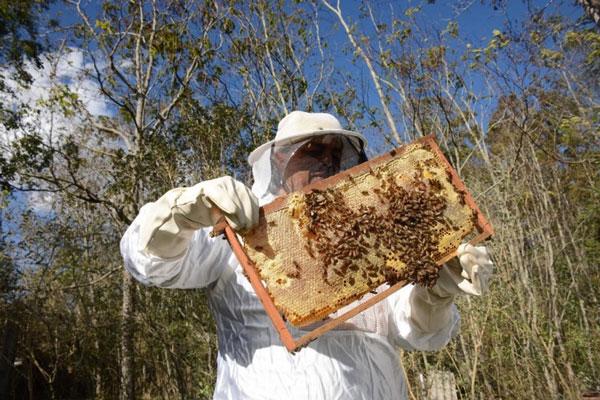 Grupo de trabalho estudará estratégias para promover consumo do mel no Estado