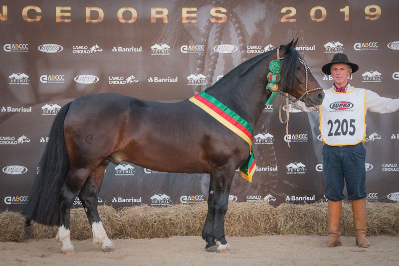 Criatório de São Lourenço do Sul leva prêmio de melhor Cavalo Crioulo na Expointer