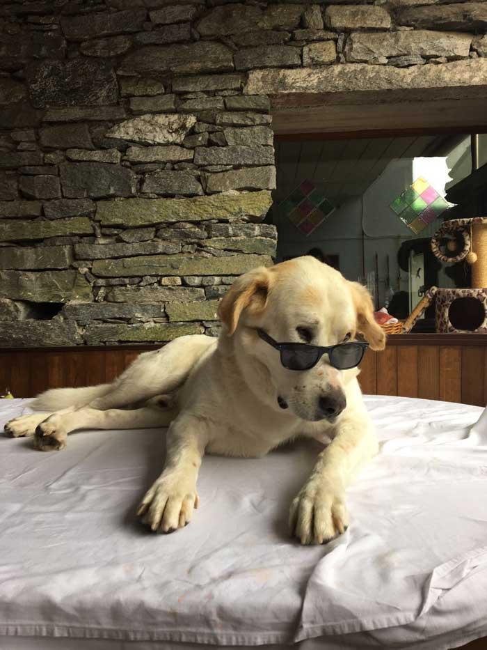 Casa Orizzonti  rifugio animali di Prosito