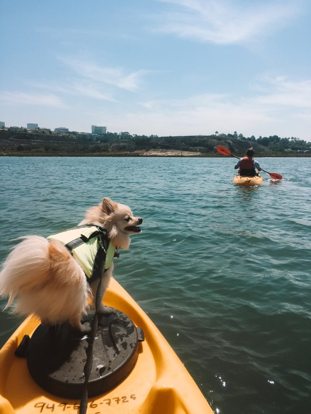 Upper Newport Bay Kayaking