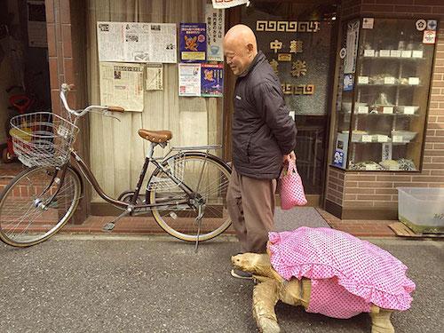 man-walking-tortoise