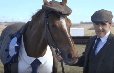 Stop Horsing Around & Suit Up!
