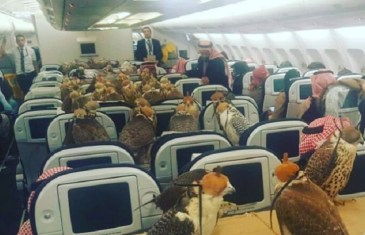Birds on a Plane