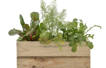 Herbs for Your Kitchen with Lifestyle Home Garden