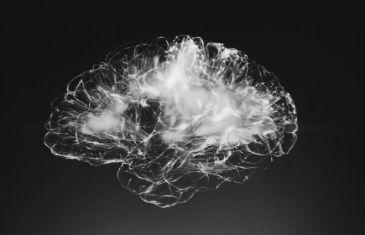 A Neurologist's Tips for an Elite Brain