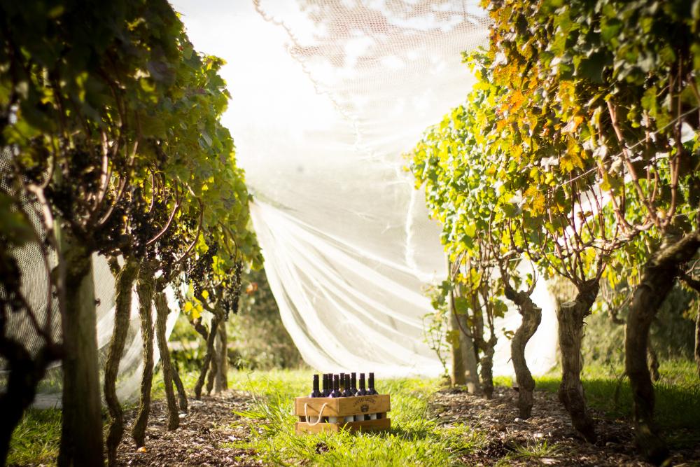 PRIDE in the vineyard