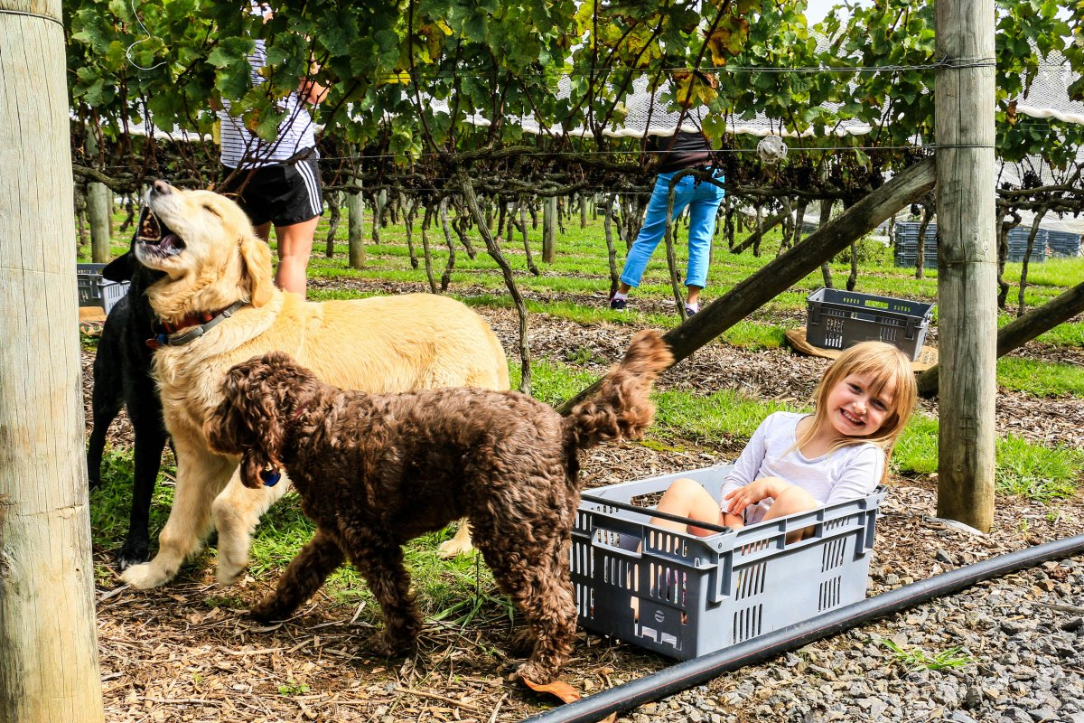 Harvest 2017 - Stella and the dogs