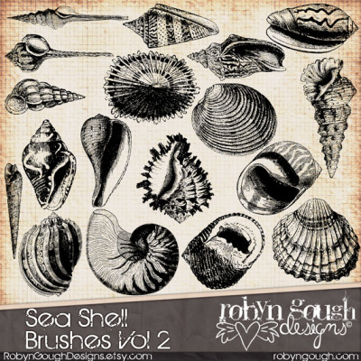Sea Shell Photoshop Brushes