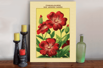 Coquelourde Ephemera Retro Flower Art Canvas