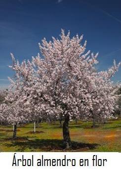 El Almendro  Frutales y requerimiento climtico