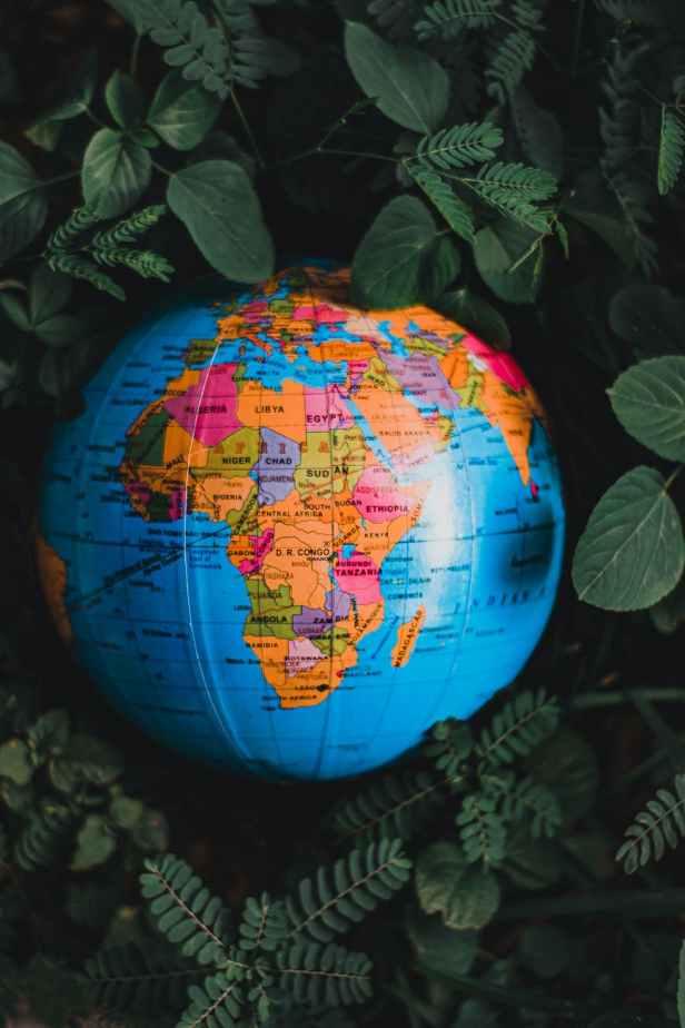 globe on green plants