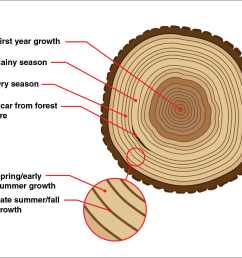 this diagrams shows the annual rings of a tree trunk wiring annual tree ring diagram [ 1160 x 992 Pixel ]