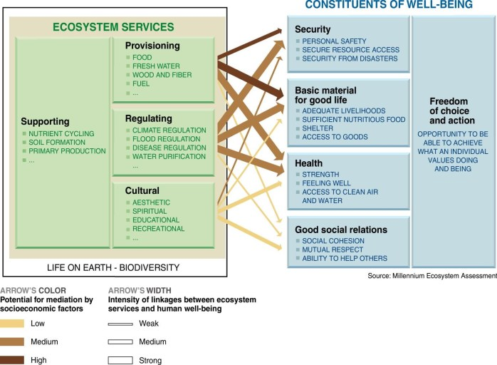 Figure 1. Figure depicting four categories of ecosystem services and their relations to common constituents of human well-being, as described by the Millennium Ecosystem Assessment report (2005). As depicted in this figure, socioeconomic factors which influence these relationships will not be discussed in this report. Credit: Millennium Ecosystem Assessment, millenniumassessment.org.