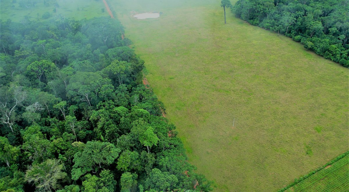 Deforestation creates immediate impacts on rainfall and temperature, which can occur locally and as far away as other continents. Deforestation And Climate Change Climate Institute
