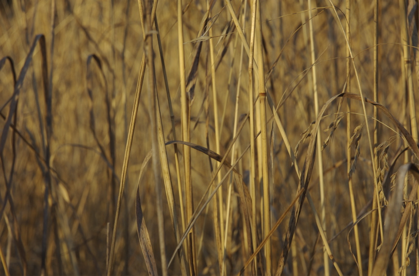 Photographs by Ed Wiebe Dry Grass