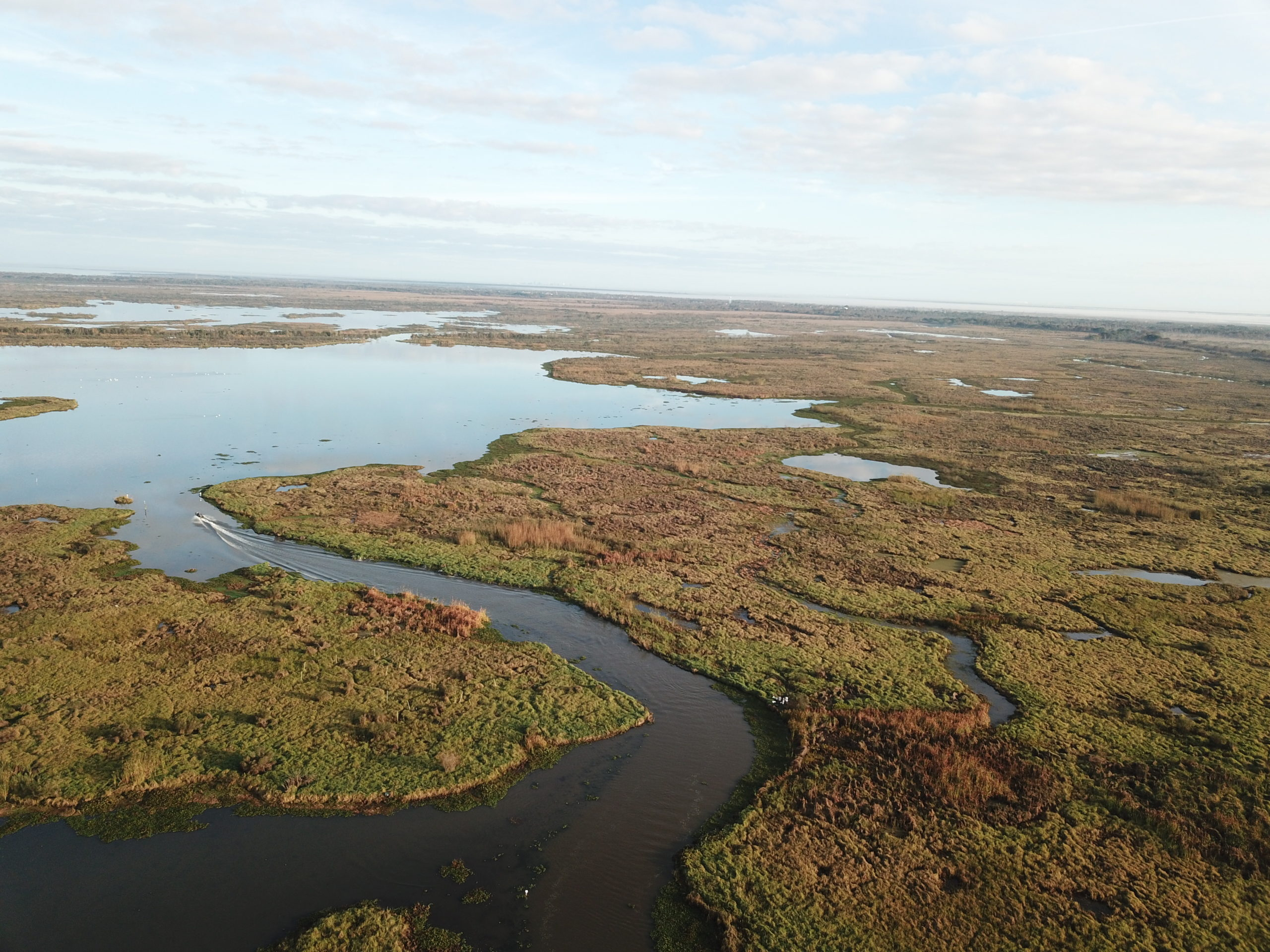 Carbon storage, hurricanes and history: The importance of preserving coastal wetlands