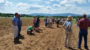 Planting corn in Stuarts Draft
