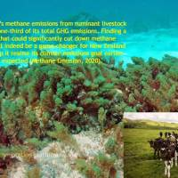 Climate Change Solution - Asparagopsis Seaweed Reduces Methane Emissions