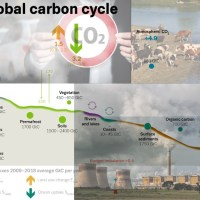 Learning the Carbon Cycle and Anthropogenic Climate Change