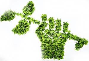 green fist plant