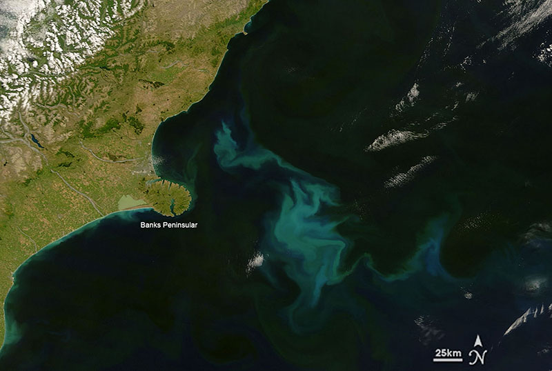 Fig. 3: Large phytoplankton can be seen from space. Photograph off the Canterbury coast January 10, 2008, by the Moderate Resolution Imaging Spectroradiometer (MODIS) on NASA's Terra satellite.