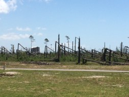 Tyndall Air Force Base Grounds_2019_4_30