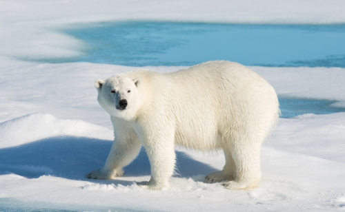 Attenborough's Arctic Betrayal: New video reveals that terrorizing young children about climate began with polar bears