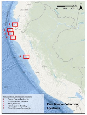 Peru Bivalve Collection Locations