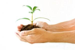 Hands holding seedling plant